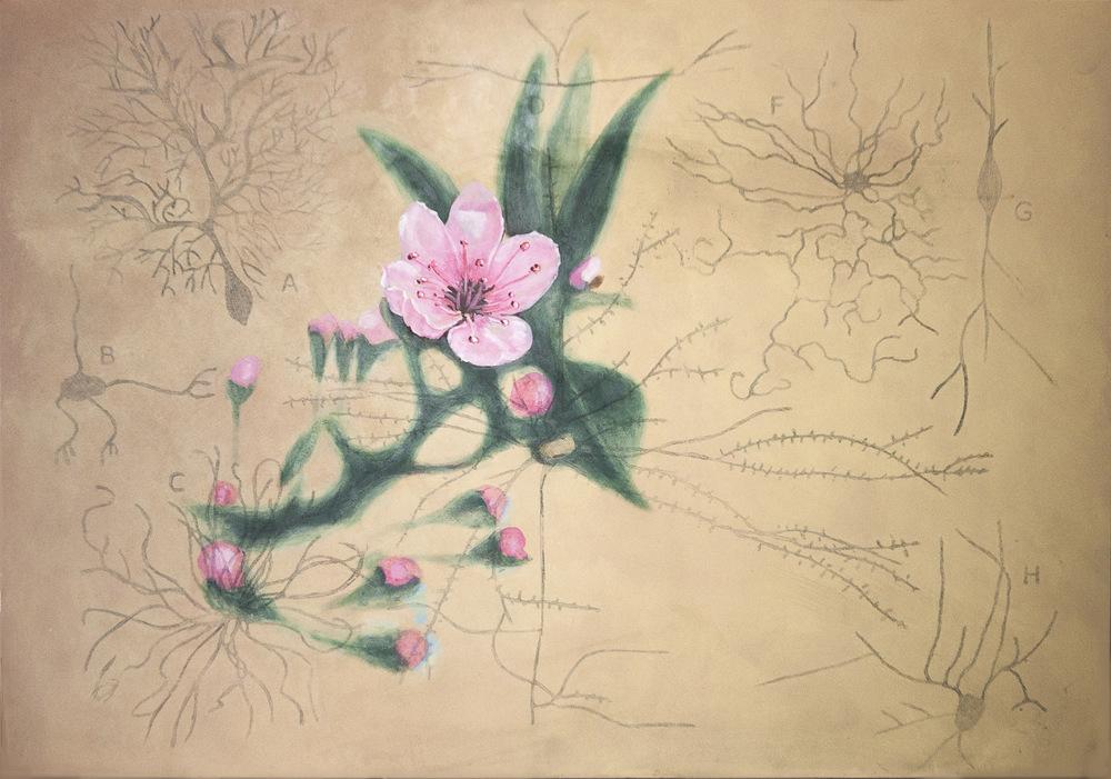 Anatomia del paisaje flor